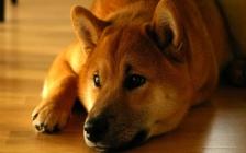 """Dogecoin是系统的中指"""